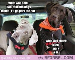Dog In Car Meme - dogs have selective hearing b for bel