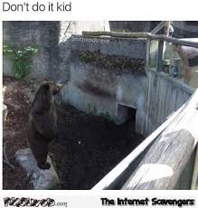 Funny Bear Meme - don t do it kid funny bear meme pmslweb