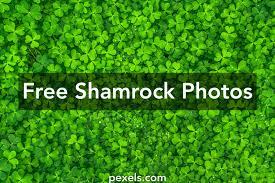 free stock photos of shamrock pexels