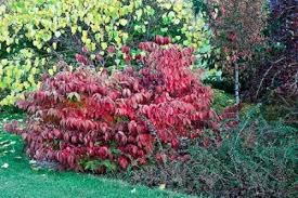 country gardener fall color trees shrubs