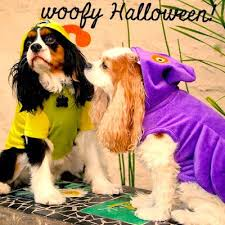 Martha Stewart Dog Halloween Costumes 158 Cavalier Love Images Cavalier Html