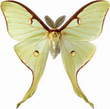 butterfly cliparts butterflies clipart clip art