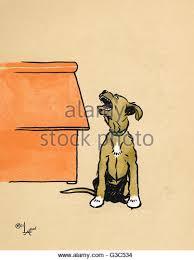 boxer dog howling howling dog night stock photos u0026 howling dog night stock images