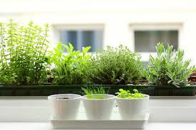 Herb Container Gardening Ideas Herb Garden Ideas Furnish Burnish