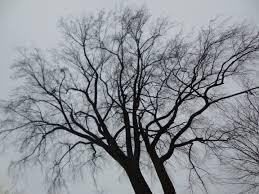file a winter tree jpg wikimedia commons