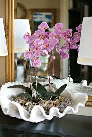 Ssf Home Decor by Best 25 Orchid Arrangements Ideas On Pinterest Orchid Flower