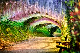 photograph wisteria flower tunnel 2 by tristan w che on 500px