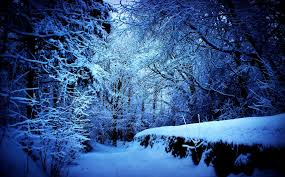 iphone themes nature winter mysterious forest snow blue nature desktop themes free