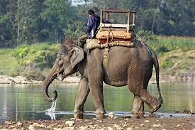 asian elephant wikipedia the free encyclopedia elephants