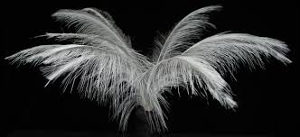 white ostrich feather centerpieces dersh feather u2013 fancy feathers