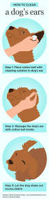 how to clean a house learn how to clean your dogs ears house paws sitter
