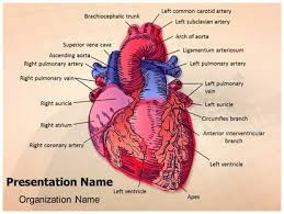 cardiac blood vessels powerpoint template background