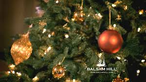 lush and realistic artificial christmas trees video by balsam hill