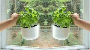 brilliant way to grow herbs on your window glass youtube