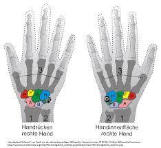 schmerzen in der handfläche die anatomie des handgelenks schmerzen im handgelenk