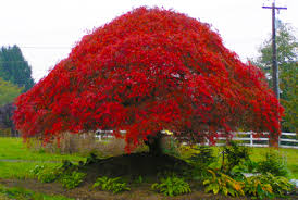 best ornamental trees for landscaping pictures ideas