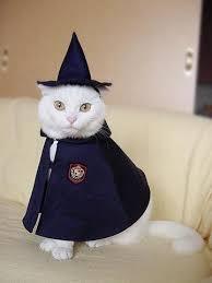 White Cat Halloween Costume 25 Cat Costumes Ideas Cute Cat Costumes