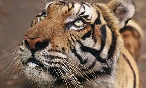 wildlife images Wildlife conservation day stories wwf jpg
