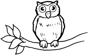 wild animal owl bird coloring books print 606602 coloring pages