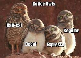 Coffee Meme Images - lol coffee owls xd my board pinterest coffee guide coffee