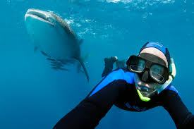 study shows value of shark tourism in australia x ray mag