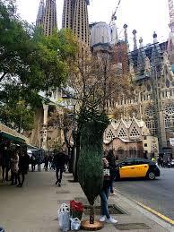 getting a christmas tree in barcelona wanderlust