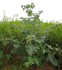 native edible plants surviving in the wild 19 common edible plants its tactical