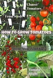 diy growing plants how to grow tomatoes in your own garden diy