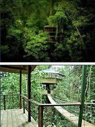 hawaiian treehouse vacation with volcano views travel