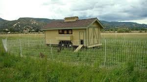 Backyard Chickens Forum by Http Www Backyardchickens Com Forum Uploads 47767 Dsc01284 Jpg