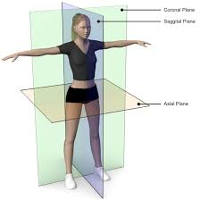 Human Anatomy Planes Of The Body Body Planes U0026 Terms Exercise Guide Bodytrainer Tv