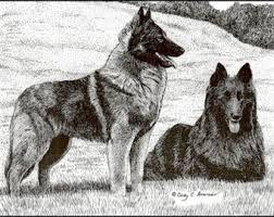 belgian sheepdog calendar belgian sheepdog etsy