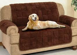get dog hair off couch best cleaning tips for clean couch
