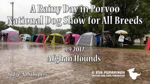 afghan hound 9 months porvoo national all breed dog show afghan hounds youtube