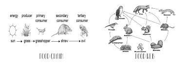 web quest food chains u0026 food webs u2013 science with mrs barton