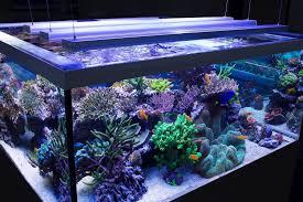 Aquarium Led Lighting Fixtures Choosing Led Lighting Fixture For Your Aquarium Http Bit Ly