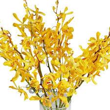 Yellow Orchid Bulk Flowers Mokara Orchids Yellow