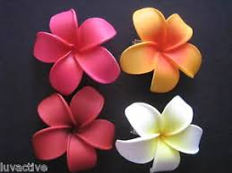 plumeria flower hawaiian plumeria flower foam hair pink white wedding