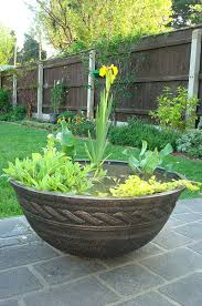 native uk pond plants blog on creating an easy care patio bowl pond