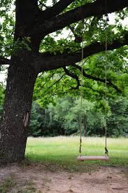how to choose the best tree for a tree swing