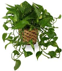 funeral plants plants for delivery
