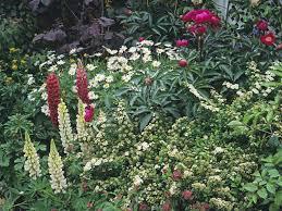 cottage garden design plants structure u0026 proximity saga