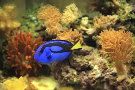 how to care for saltwater fish