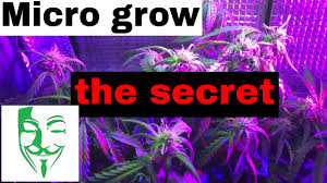 micro grow the secret how to grow in a small place weed vlog 9
