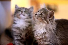 Colorado how to travel with a cat images Colorado animal rescue vegan reviews vegan travel jpg