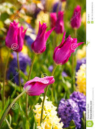 spring garden flowers stock photo image 47178012