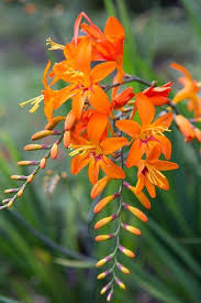 Pretty Orange Best 25 Orange Flowers Ideas On Pinterest Flowers Beautiful
