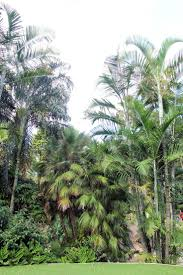 Cairns Botanical Garden by 1117 Best Tropical Images On Pinterest Tropical Garden Balinese