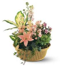 Sympathy Flowers And Gifts - funeral and sympathy flowers etiquette fromyouflowers com