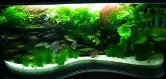 Aquascape Design Layout Home Design Stunning 360 Degree Saltwater Aquarium Wonderful